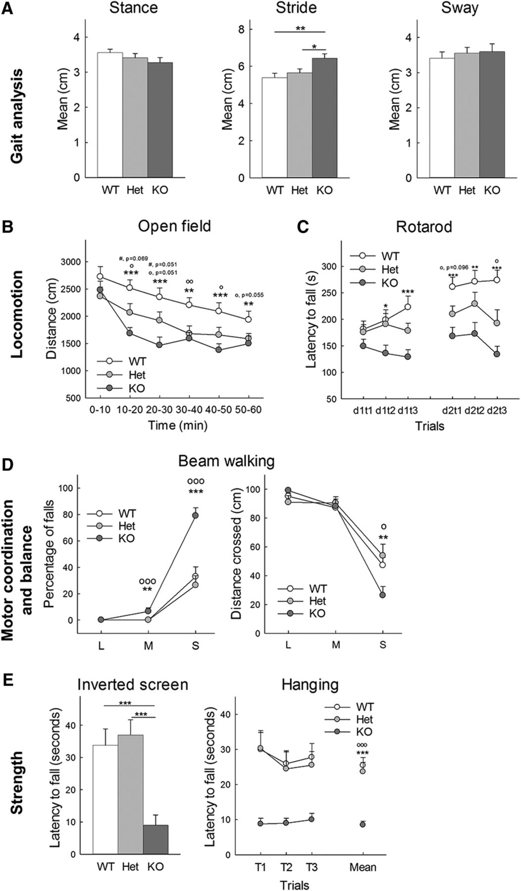 Behavioral Phenotyping of an Improved Mouse Model of Phelan