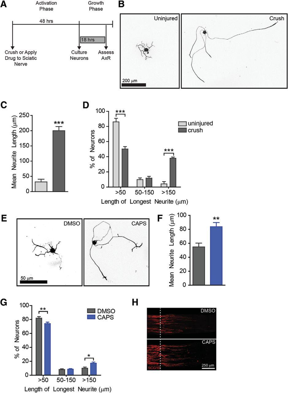 axon 50cc wiring diagram wiring diagram schematicstrpv1 agonist, capsaicin,  induces axon outgrowth after injury