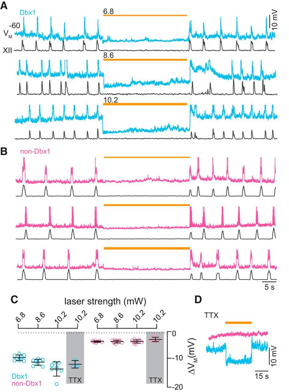 Dbx1 Pre Btzinger Complex Interneurons Comprise The Core Aa One K A Compact Current Voltage Output Integrated Amplifier Download Figure