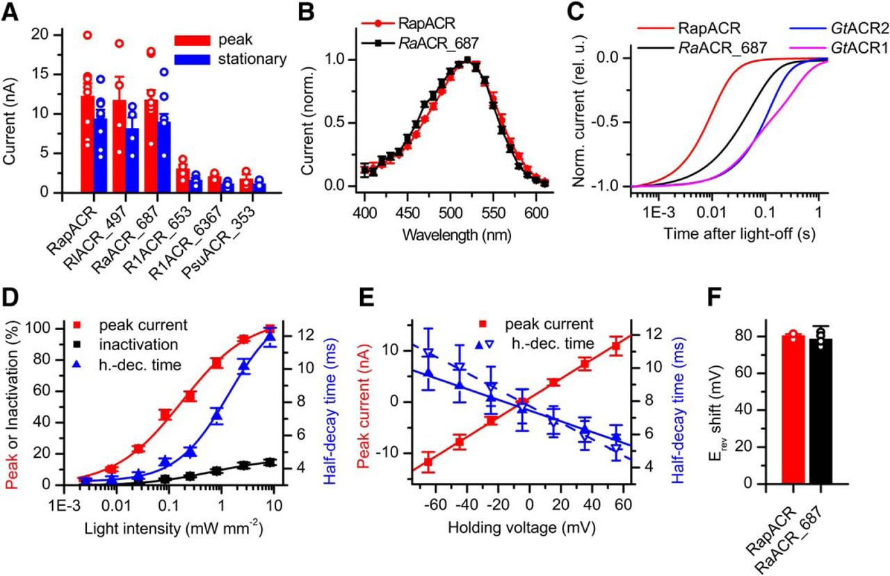 Extending the Time Domain of Neuronal Silencing with