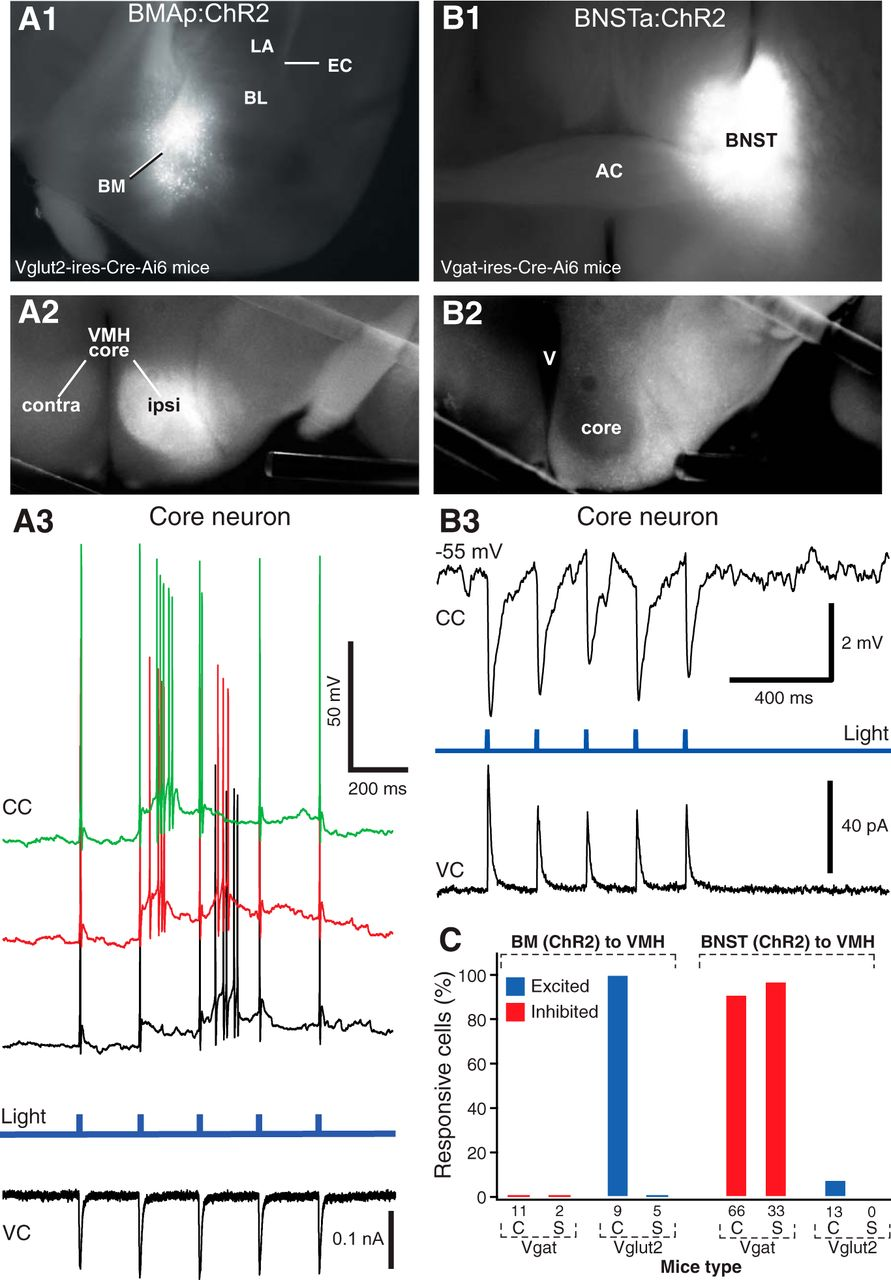 Optogenetic Study of Anterior BNST and Basomedial Amygdala