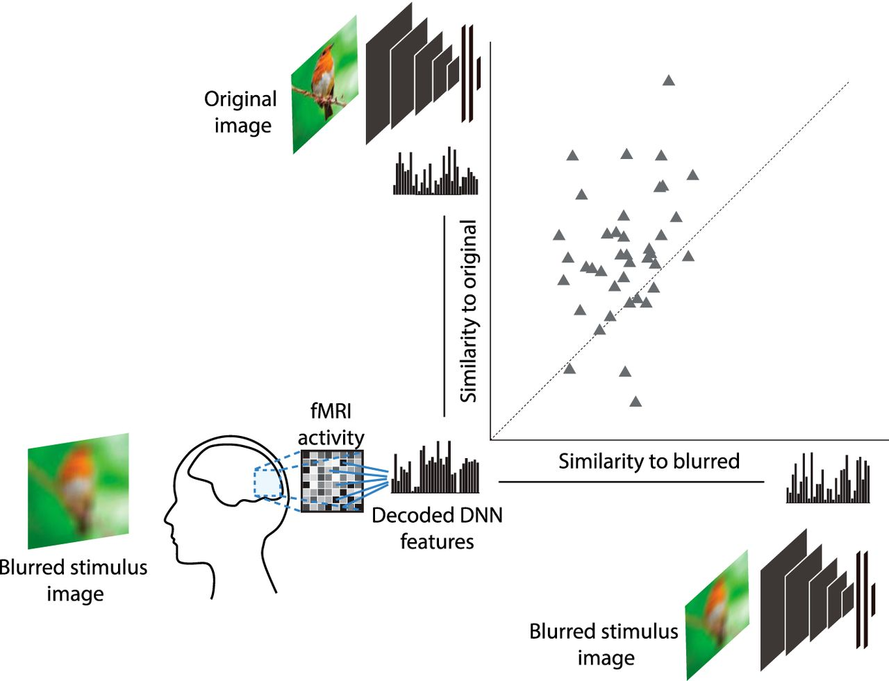 Sharpening of Hierarchical Visual Feature Representations of Blurred