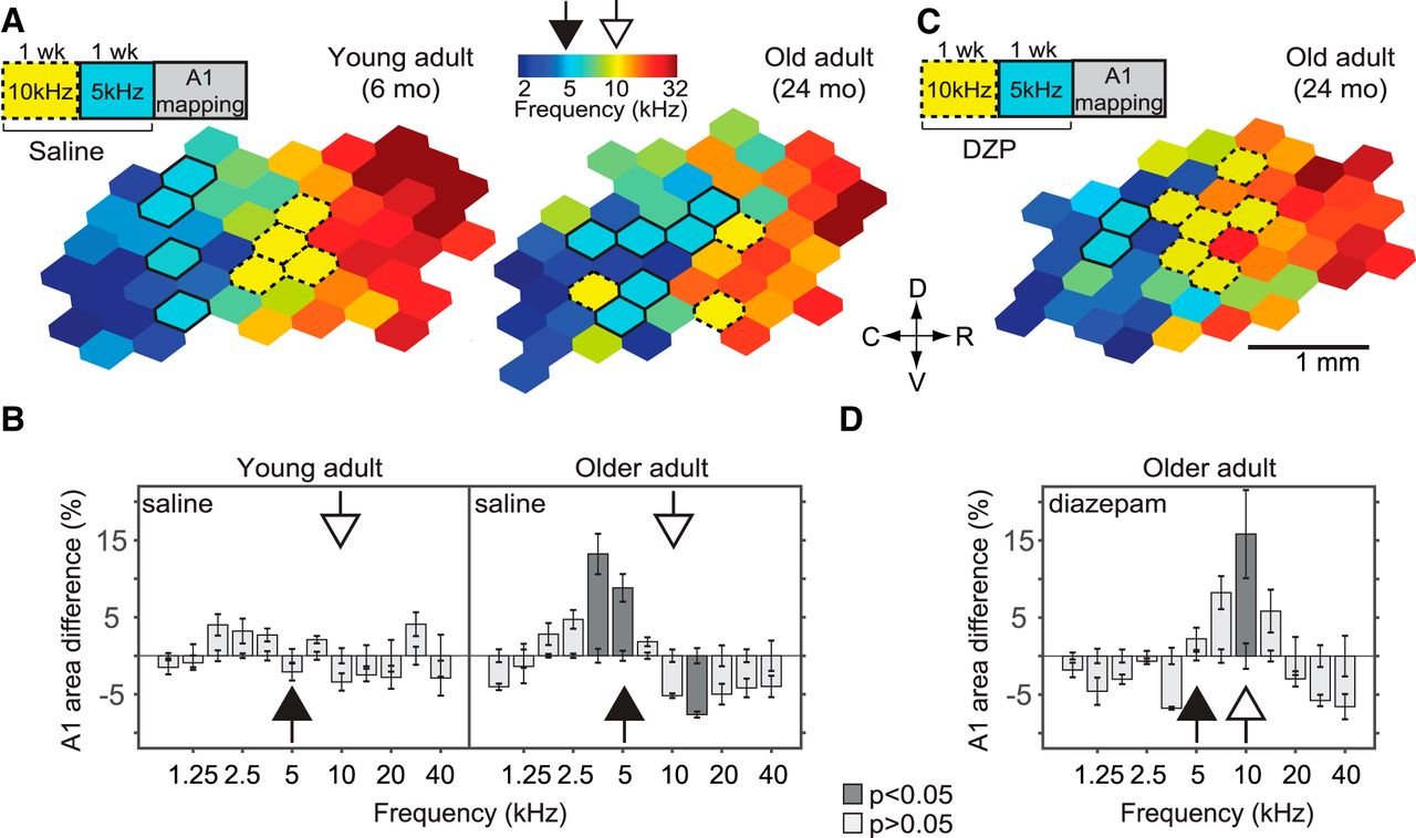 7a9313ca8e898c A Brain without Brakes: Reduced Inhibition Is Associated with ...