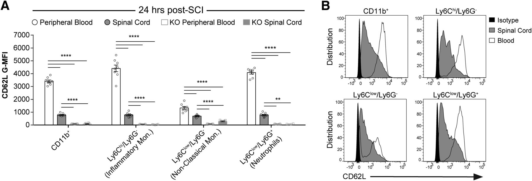 Early Targeting of L-Selectin on Leukocytes Promotes