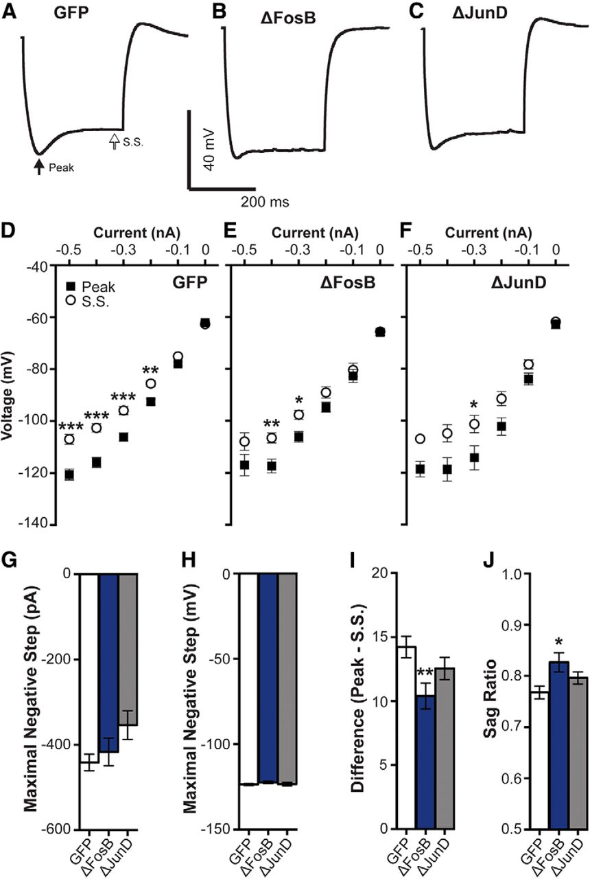 Fosb Decreases Excitability Of Dorsal Hippocampal Ca1 Neurons Eneuro Aa One K A Compact Current Voltage Output Integrated Amplifier Download Figure