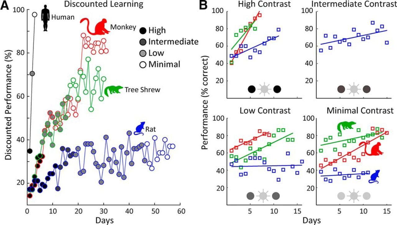 Divergent Solutions to Visual Problem Solving across Mammalian