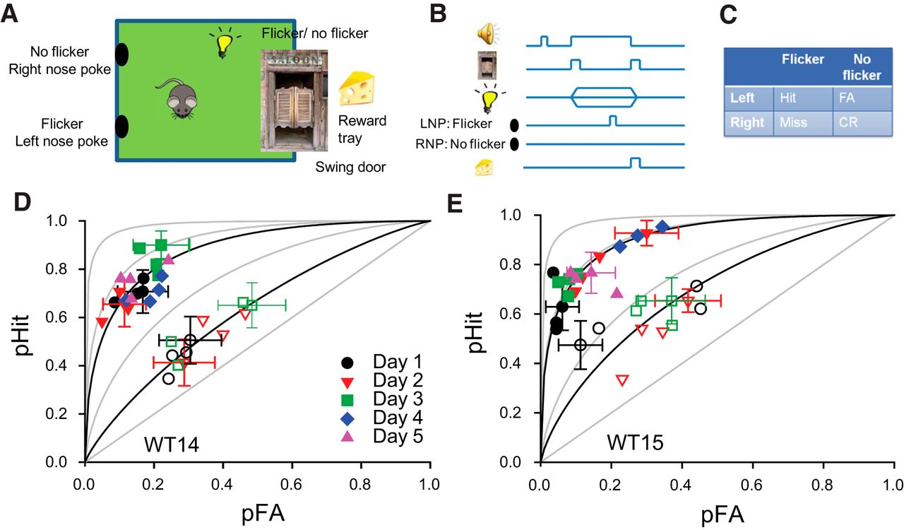 Visual Temporal Contrast Sensitivity In The Behaving Mouse Shares