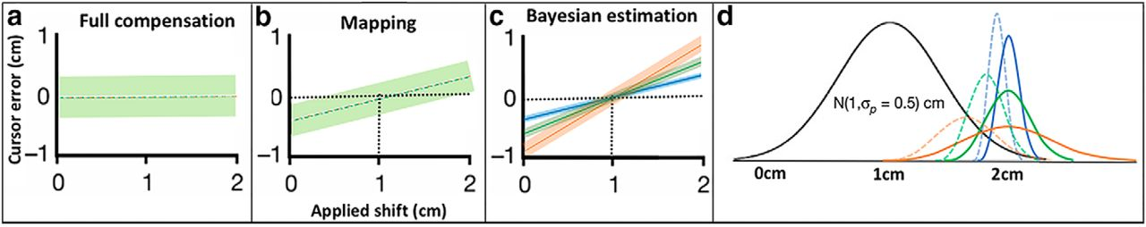 Interlimb Generalization of Learned Bayesian Visuomotor Prior Occurs