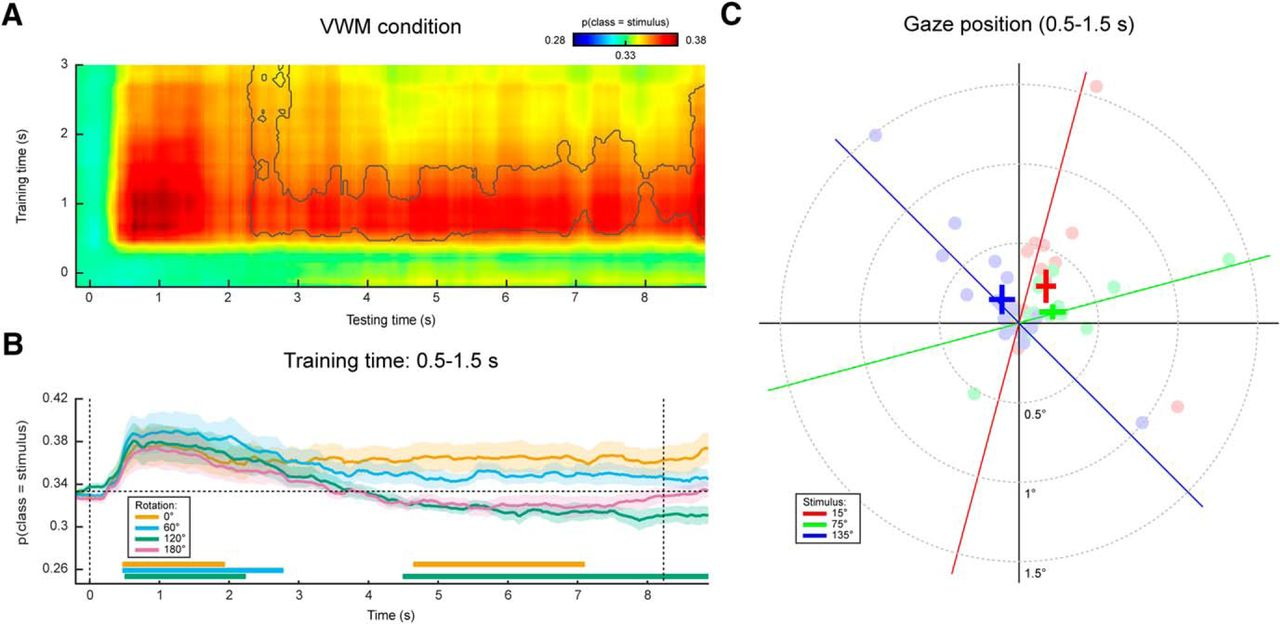 Eye Movements Reveal Temporal >> Eye Movement Related Confounds In Neural Decoding Of Visual Working