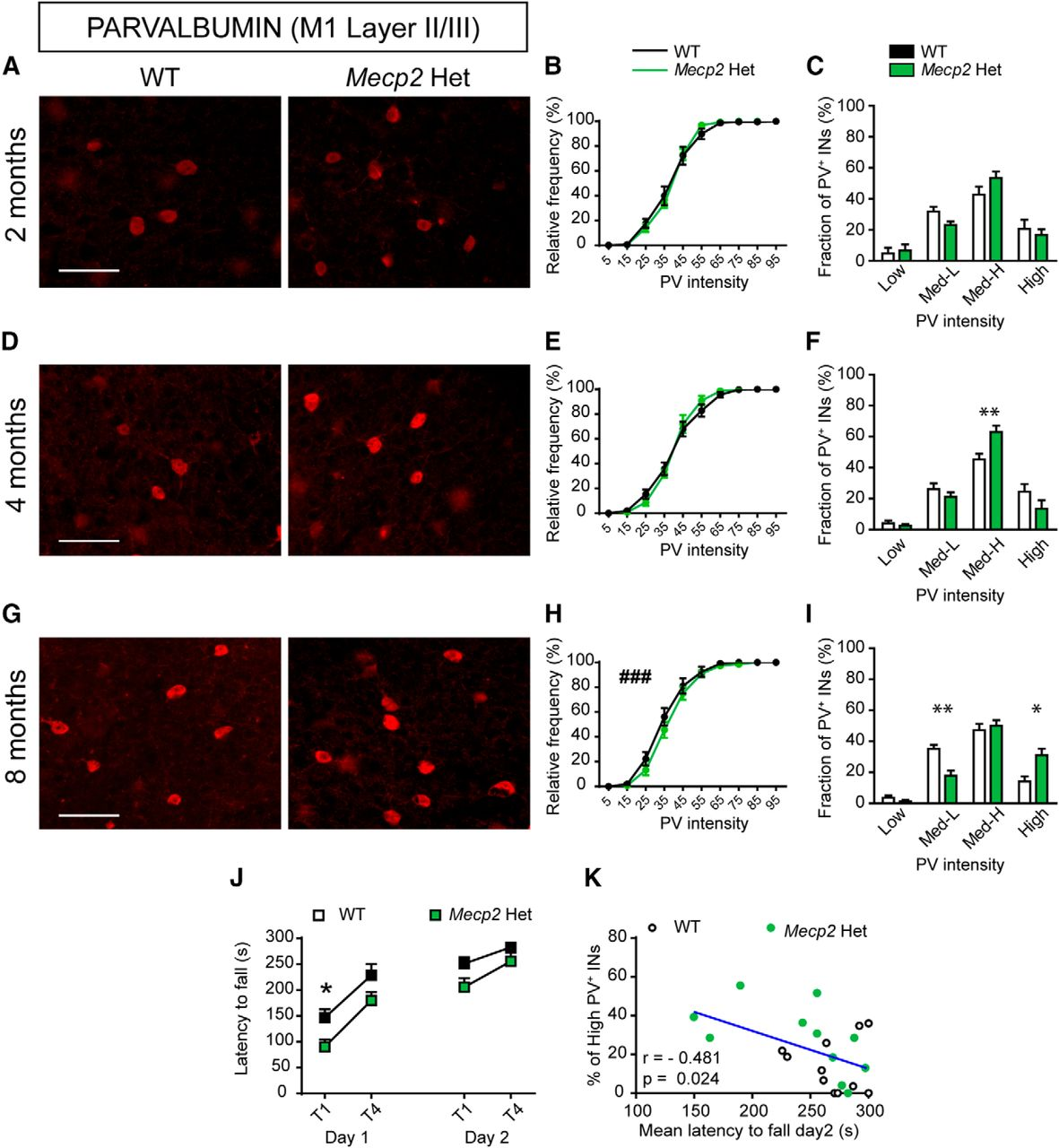 loss of mecp2 causes atypical synaptic and molecular plasticity of rh eneuro org
