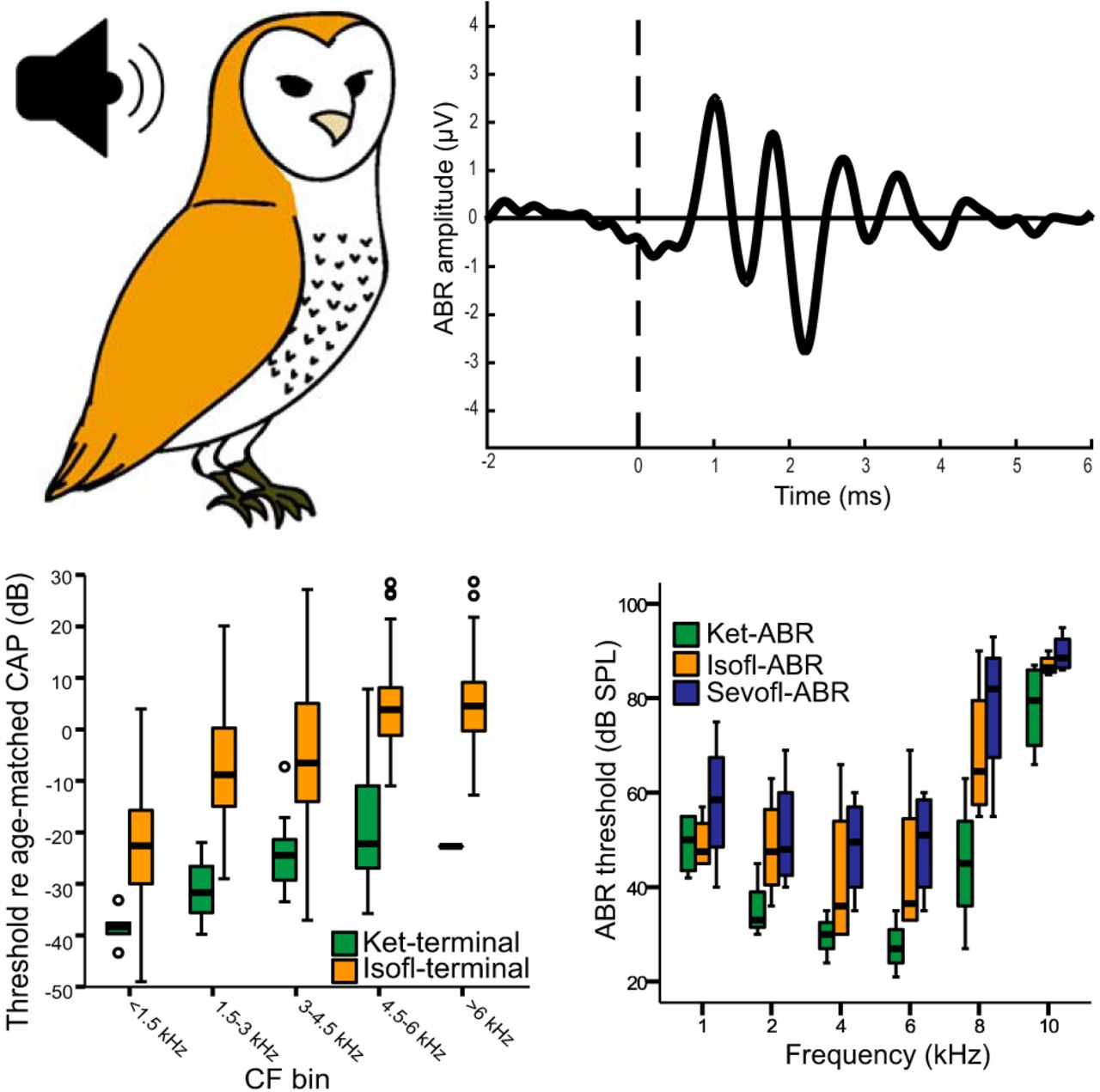 43116283 Gas Anesthesia Impairs Peripheral Auditory Sensitivity in Barn Owls ...