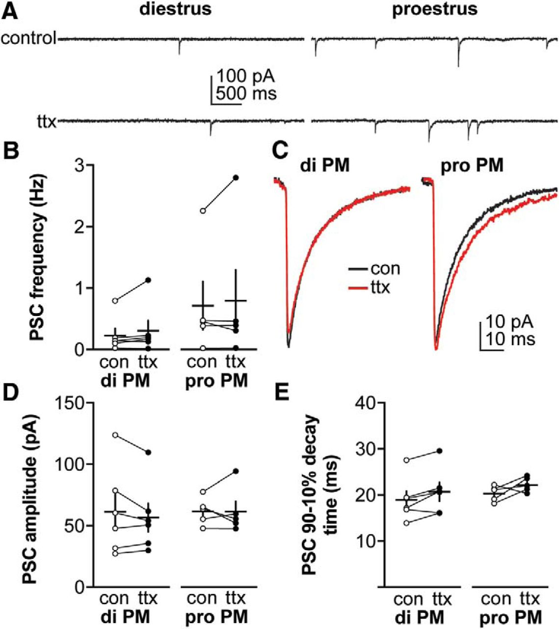 Changes in GABAergic Transmission to and Intrinsic