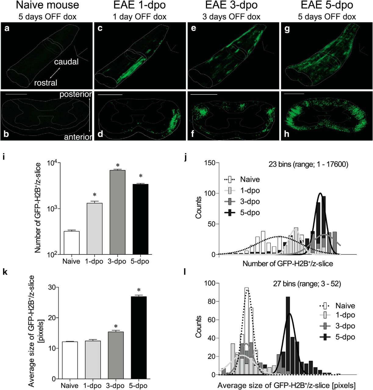 A Functionally Defined In Vivo Astrocyte Population Identified by c
