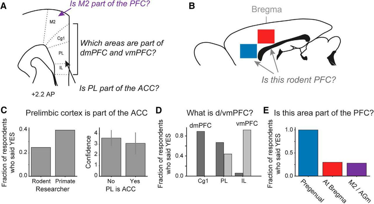 What, If Anything, Is Rodent Prefrontal Cortex? | eNeuro