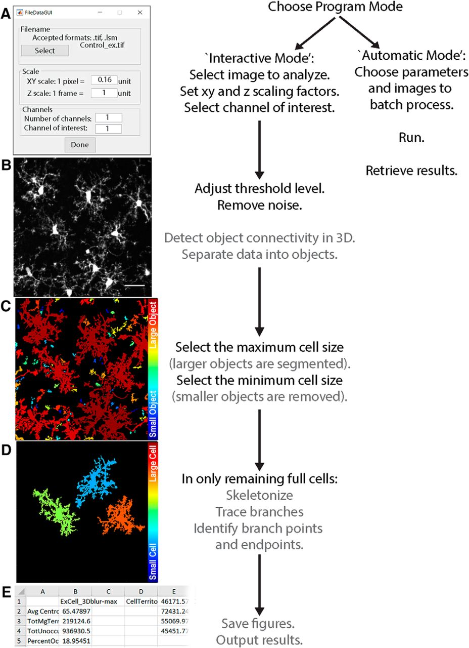 3DMorph Automatic Analysis of Microglial Morphology in Three