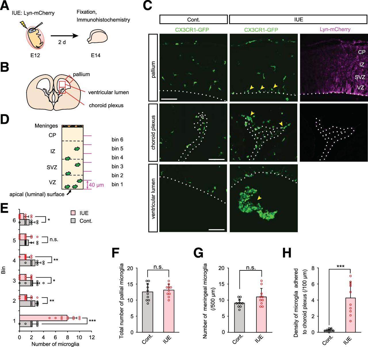 Embryonic Neocortical Microglia Express Toll-Like Receptor 9