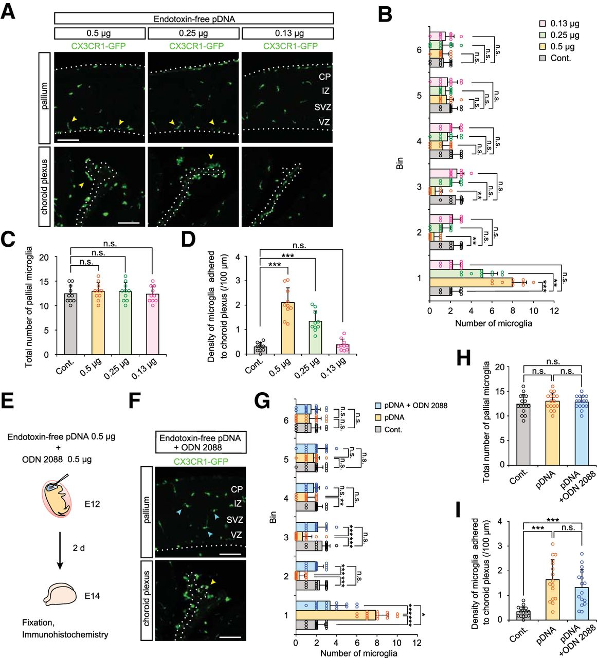 Embryonic Neocortical Microglia Express Toll-Like Receptor 9 and
