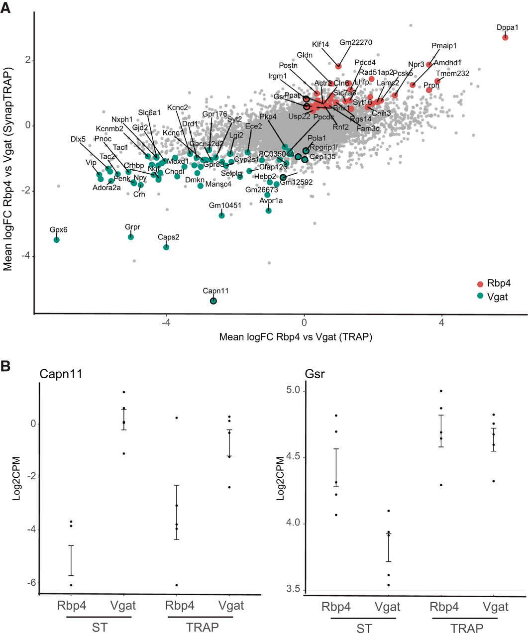 The Differences in Local Translatome across Distinct Neuron Types Is