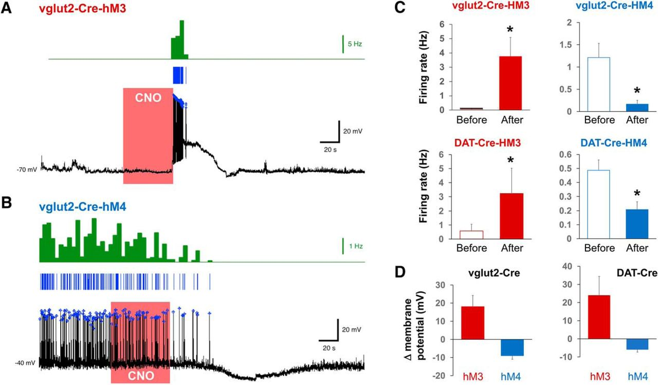 The Role of Glutamatergic and Dopaminergic Neurons in the