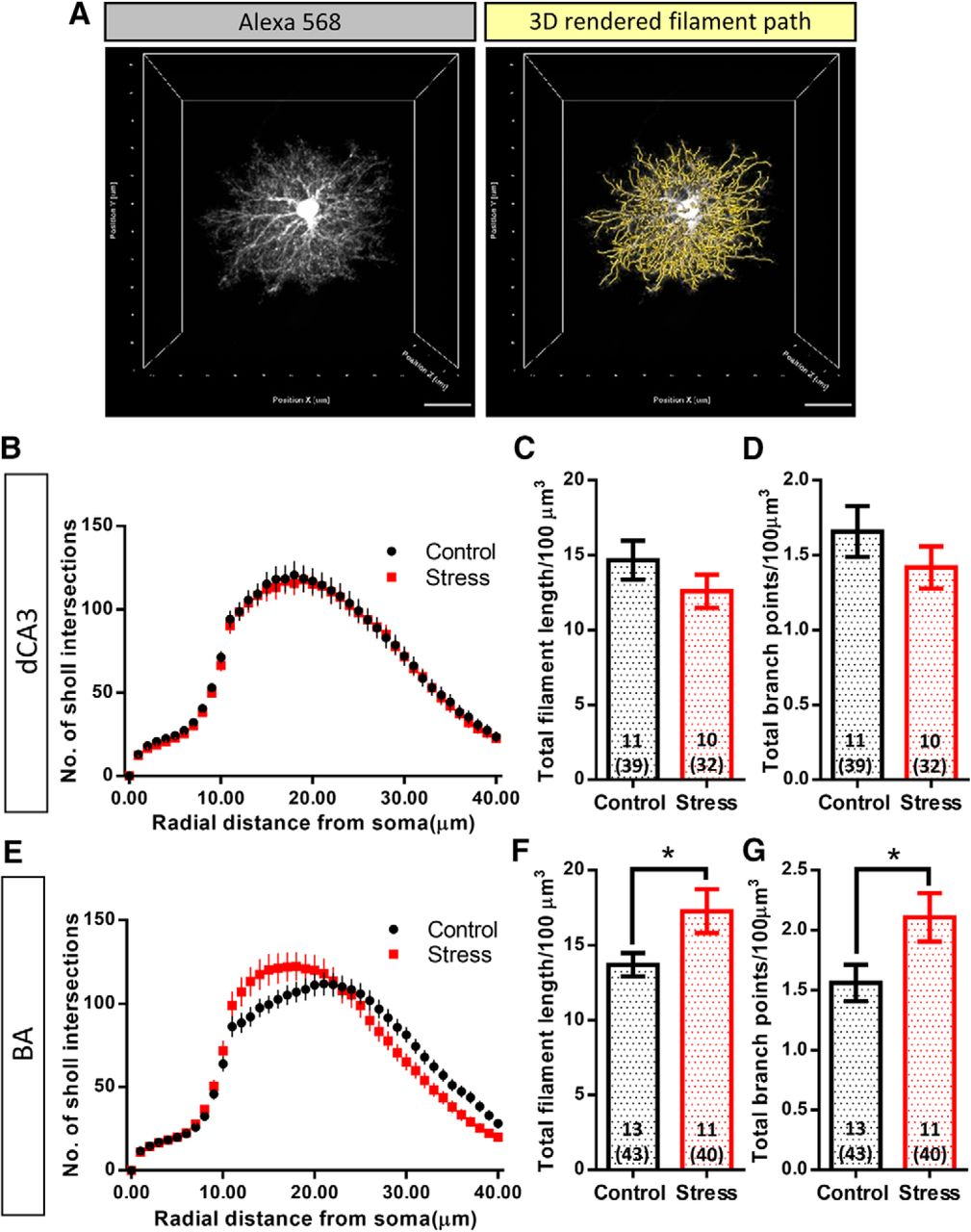 Stress Elicits Contrasting Effects on the Structure and