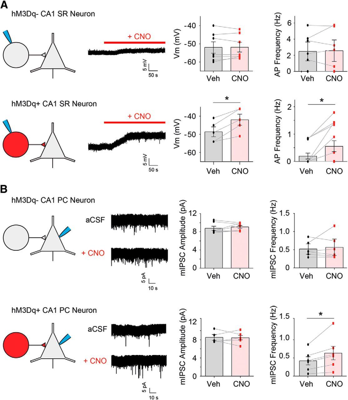 Selective Activation of Cholecystokinin-Expressing GABA (CCK