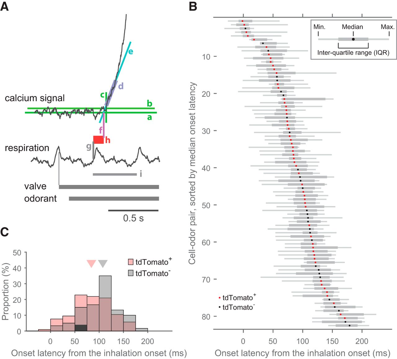 Narrowly Confined and Glomerulus-Specific Onset Latencies of Odor