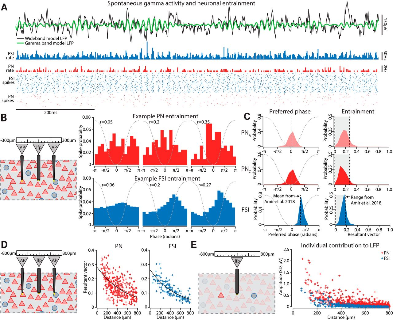 Gamma Oscillations in the Basolateral Amygdala: Biophysical