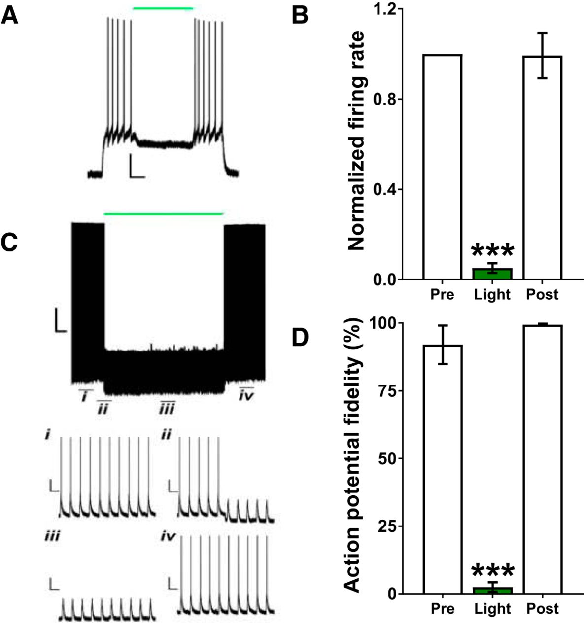 Postmeal Optogenetic Inhibition of Dorsal or Ventral