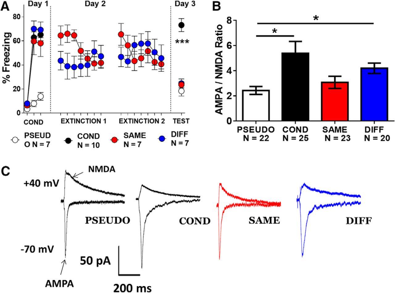 Plasticity of NMDA Receptors at Ventral Hippocampal Synapses