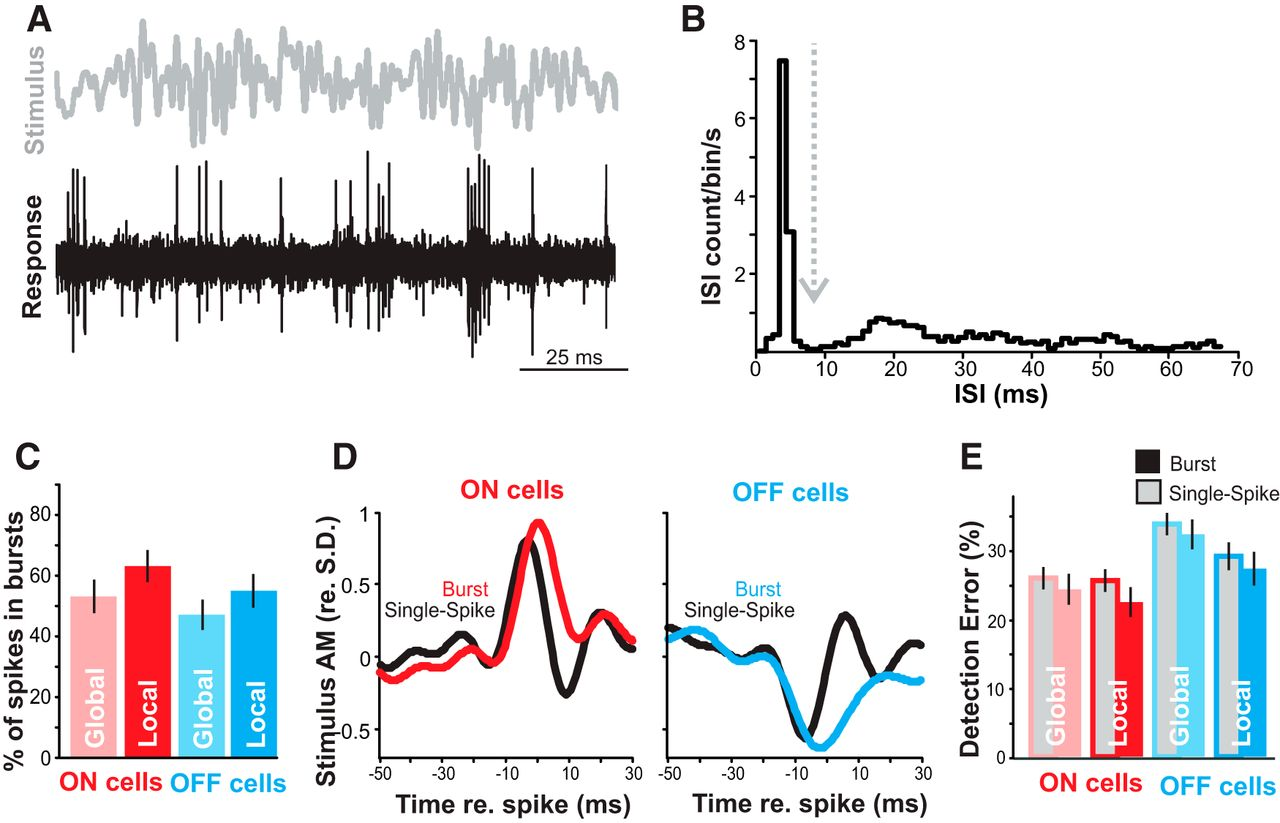 Neural Processing of Communication Signals: The Extent of
