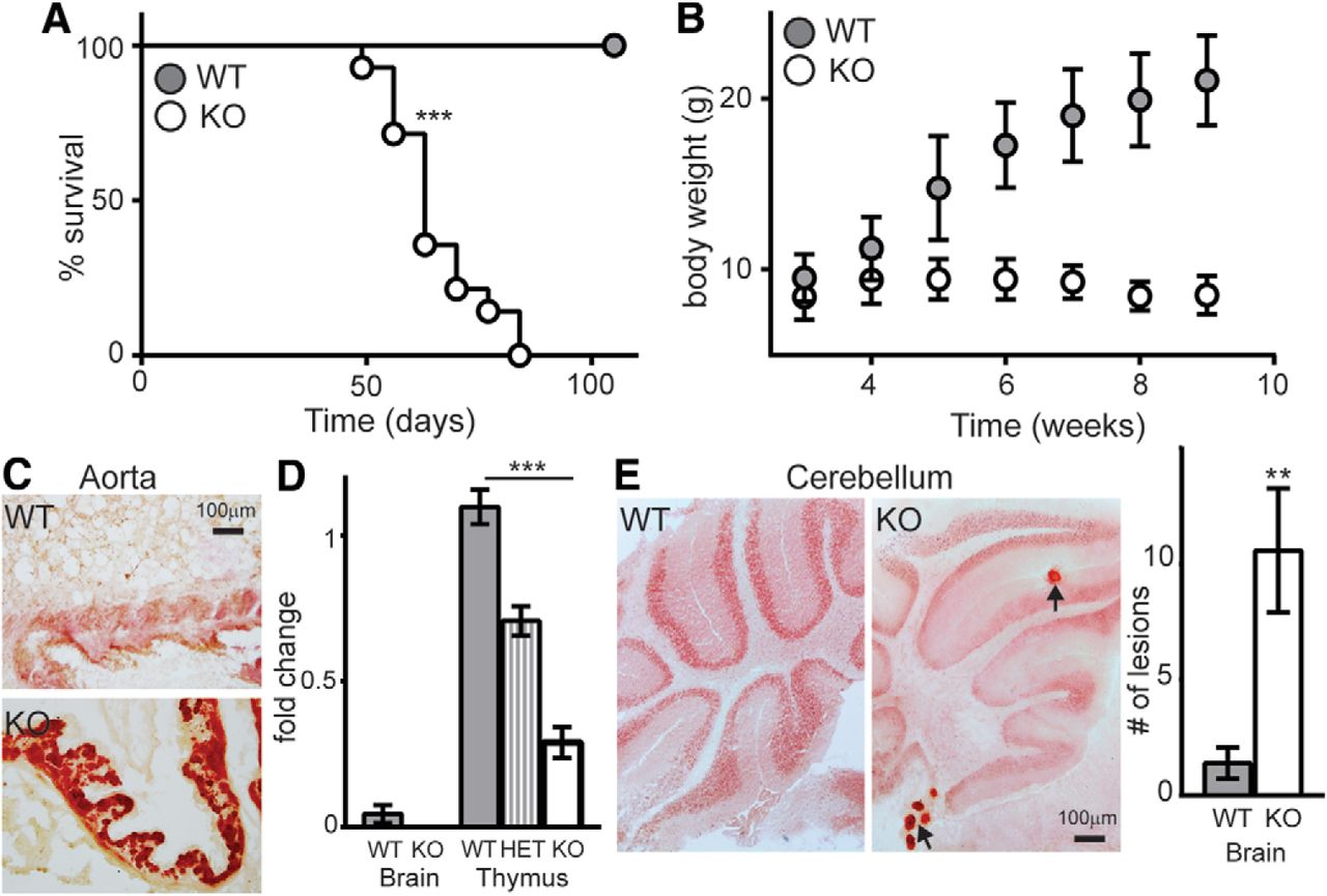 FGF-23 Deficiency Impairs Hippocampal-Dependent Cognitive Function