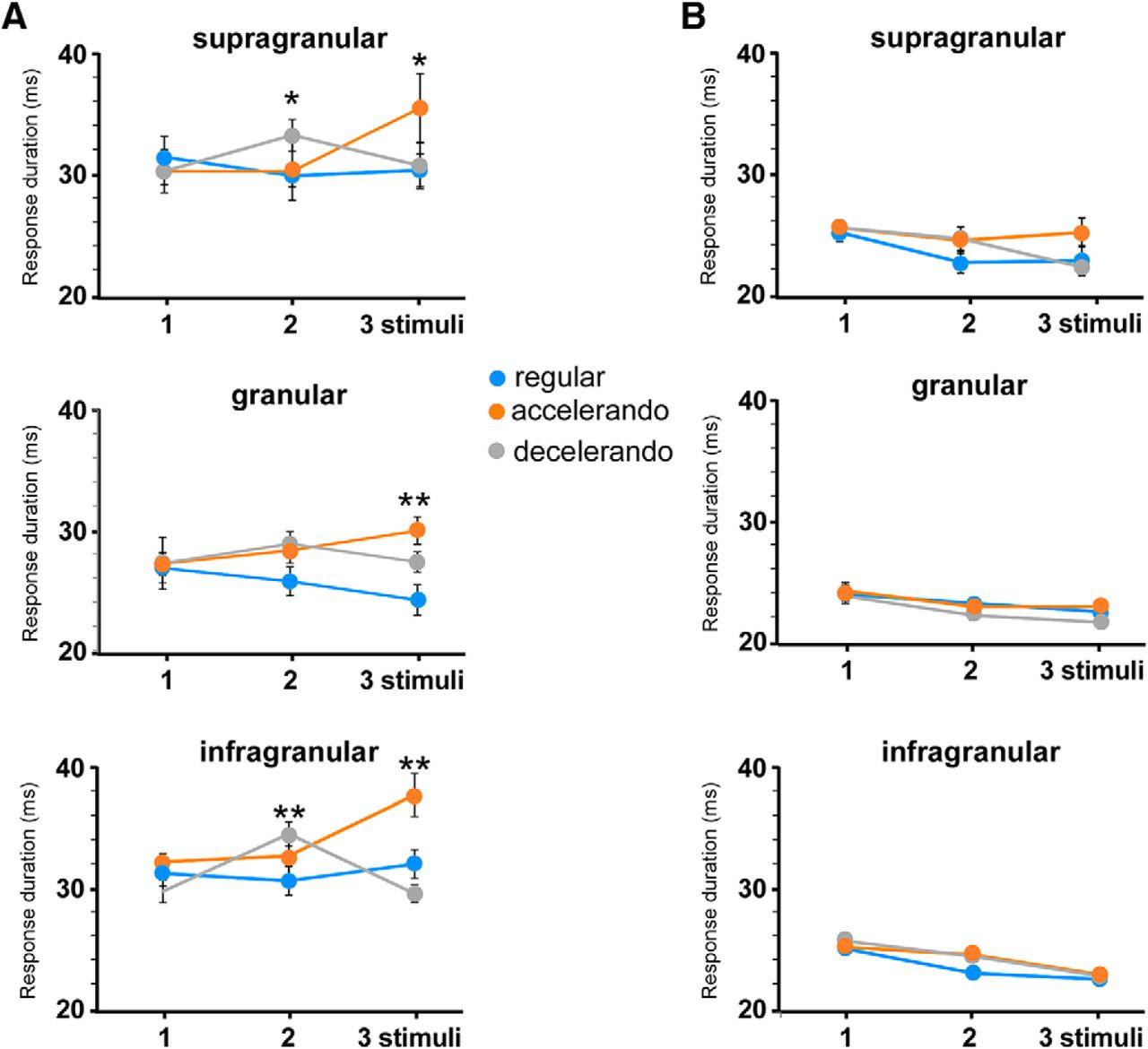 Response Adaptation in Barrel Cortical Neurons Facilitates