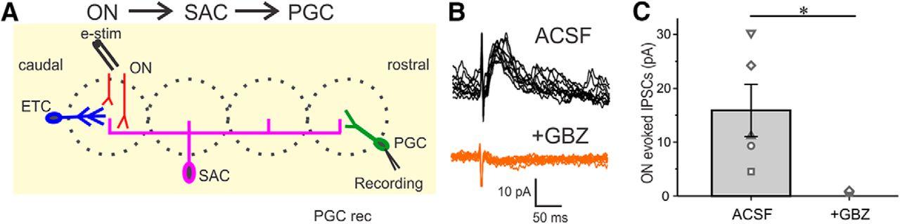 Reciprocal Inhibitory Glomerular Circuits Contribute to
