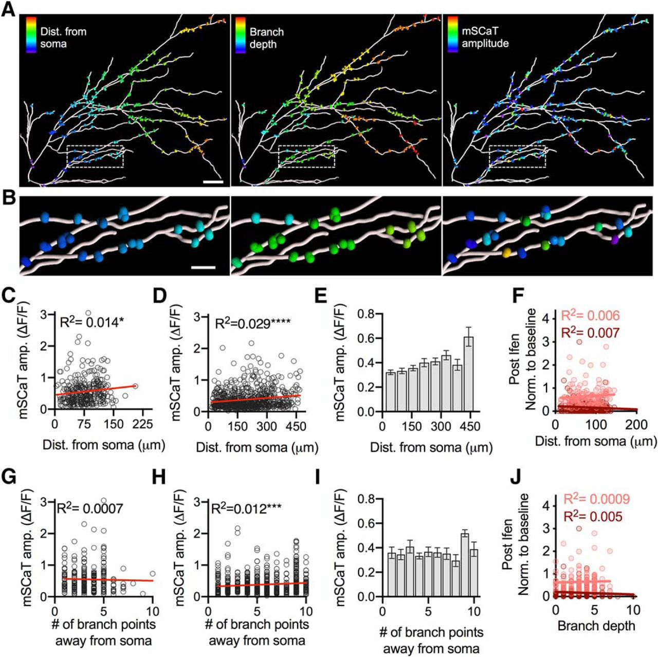Properties of Individual Hippocampal Synapses Influencing