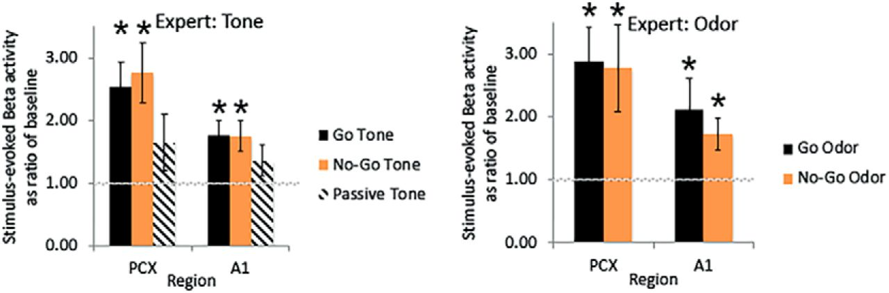Odor Identification in Rats: Behavioral and