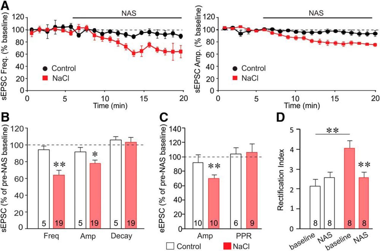 Labile Calcium-Permeable AMPA Receptors Constitute New