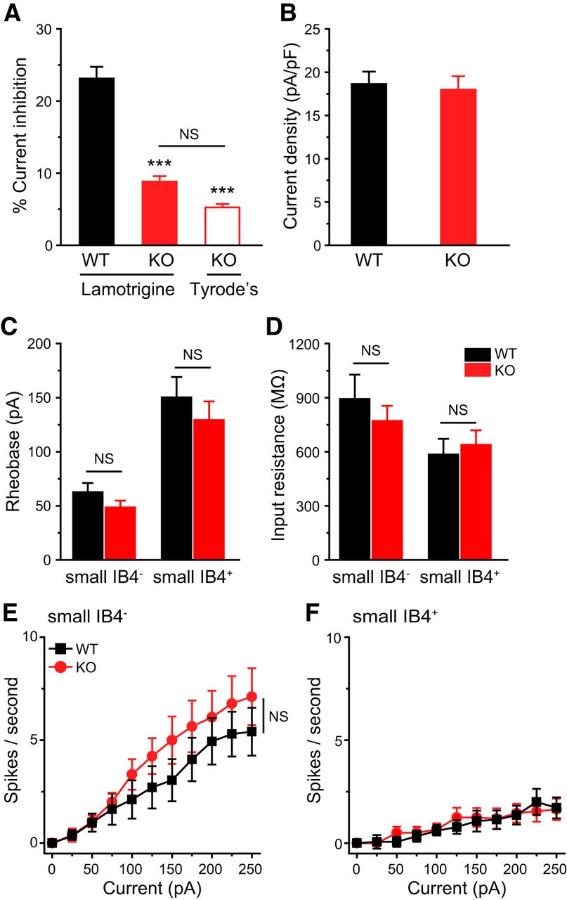 TRESK K+ Channel Activity Regulates Trigeminal Nociception