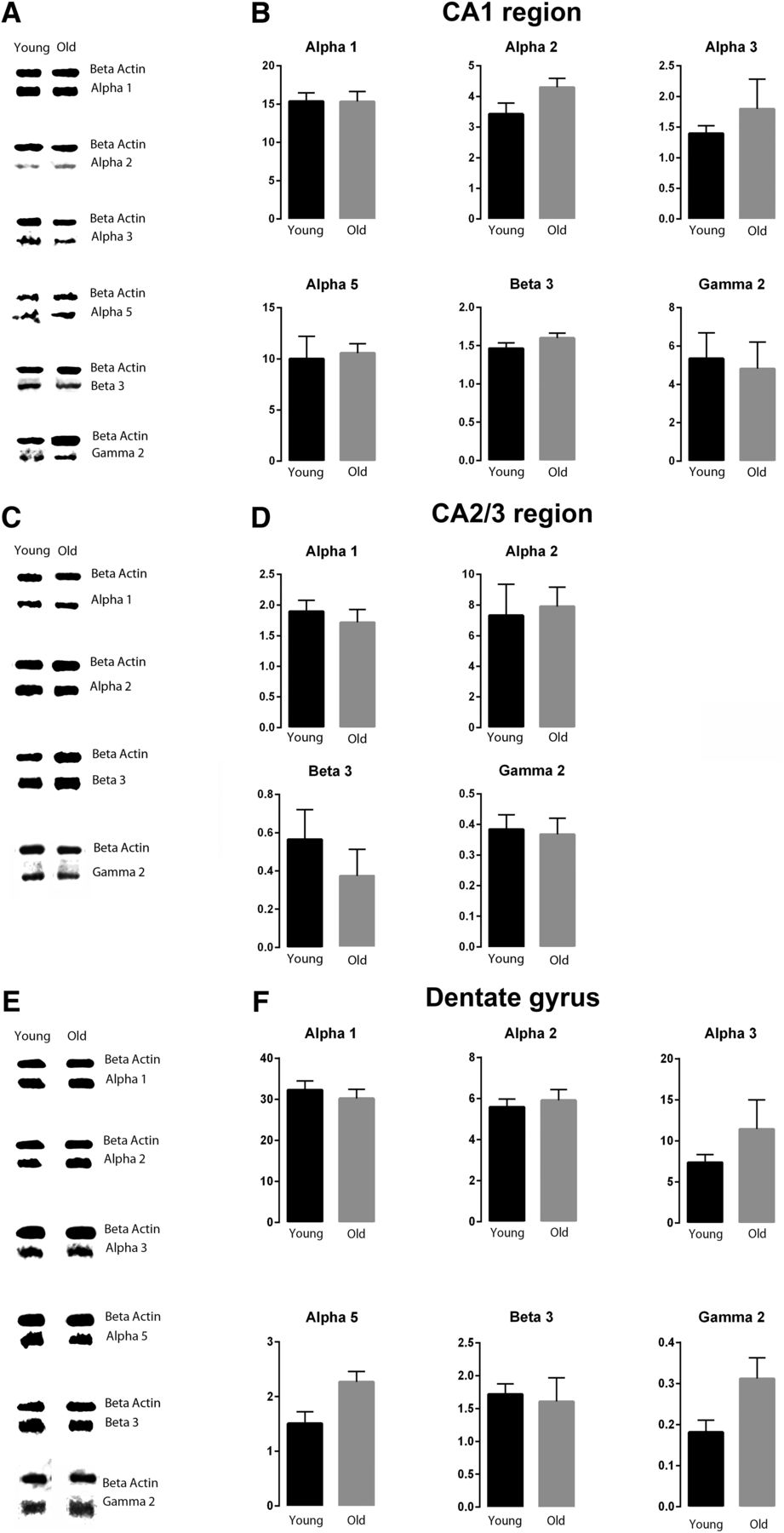 GABAA Receptors Are Well Preserved in the Hippocampus of