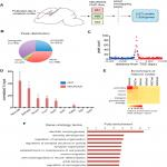 NEUROD2 Regulates <em>Stim1</em> Expression and Store-Operated Calcium Entry in Cortical Neurons