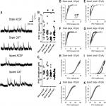 Intranasal Administration of Oxytocin Attenuates Social Recognition Deficits and Increases Prefrontal Cortex Inhibitory Postsynaptic Currents following Traumatic Brain Injury