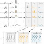 Dynamic Input Conductances Shape Neuronal Spiking
