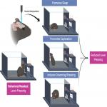 Toward Standardized Guidelines for Investigating Neural Circuit Control of Behavior in Animal Research