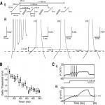 Cellular and Network Mechanisms May Generate Sparse Coding of Sequential Object Encounters in Hippocampal-Like Circuits