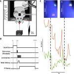 Pixying Behavior: A Versatile Real-Time and <em>Post Hoc</em> Automated Optical Tracking Method for Freely Moving and Head Fixed Animals