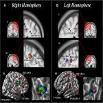 Area 8A within the Posterior Middle Frontal Gyrus Underlies Cognitive Selection between Competing Visual Targets