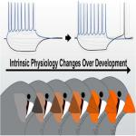 Neuronal Intrinsic Physiology Changes During Development of a Learned Behavior
