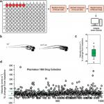 Large-Scale Phenotype-Based Antiepileptic Drug Screening in a Zebrafish Model of Dravet Syndrome