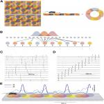 Theta Oscillations Gate the Transmission of Reliable Sequences in the Medial Entorhinal Cortex