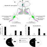 Simultaneous Assessment of Homonymous and Heteronymous Monosynaptic Reflex Excitability in the Adult Rat