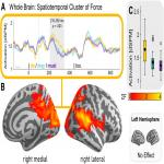 Neural Correlates of Modal Displacement and Discourse-Updating under (Un)Certainty